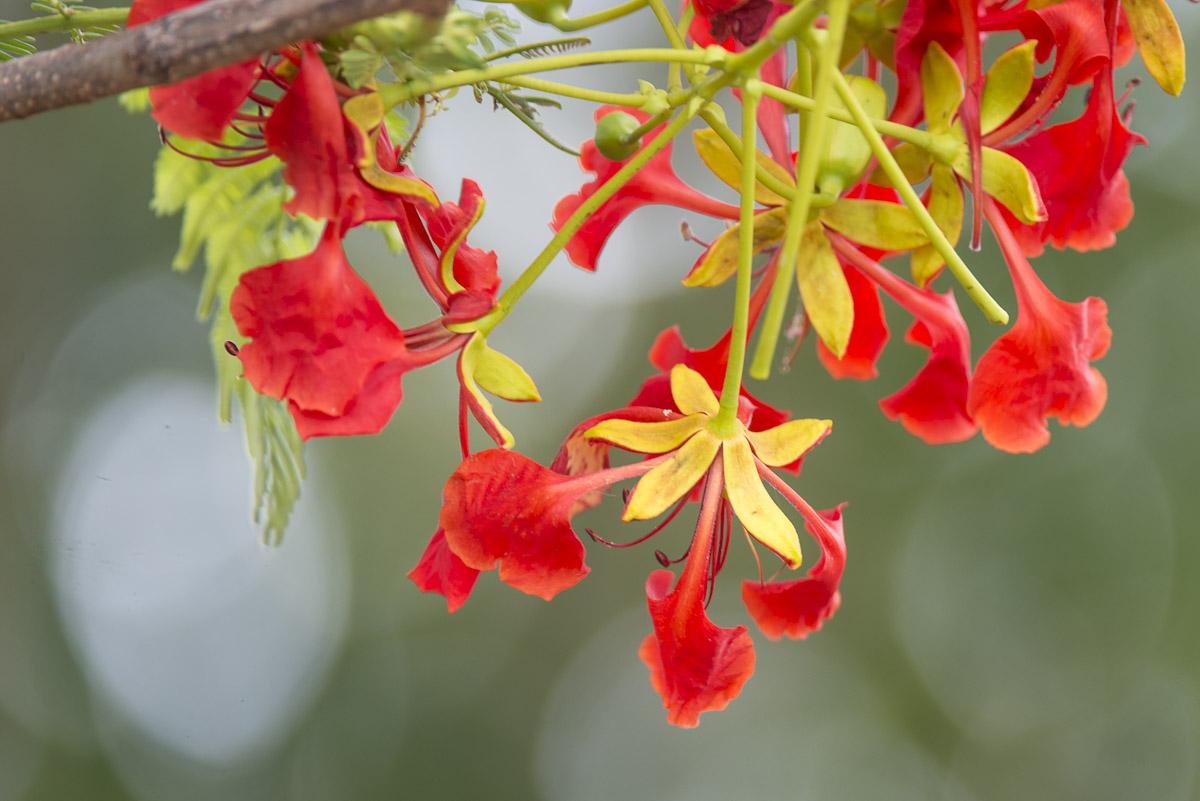 Cairns 2014-6896
